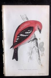 F. O. Morris 1867 Hand Col Print. American White Winged Crossbill